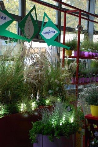 Il giardino invernale di syngenta flowers for Giardino invernale