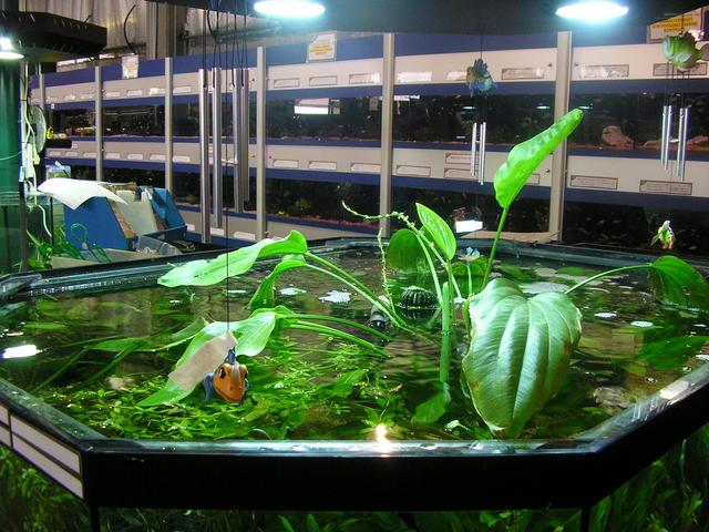 nuovi mercati  le piante per gli acquari e i laghetti